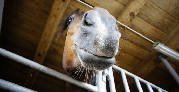 Das Glück der Erde liegt auf dem Rücken der Pferde. Und natürlich in Miesenbach, bei den örtlichen Reitsportvereinen.