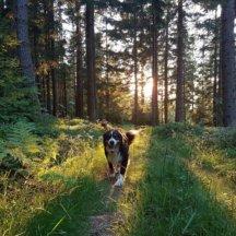 Jetzt wird gewählt: Die Hunde-Stars von Miesenbach