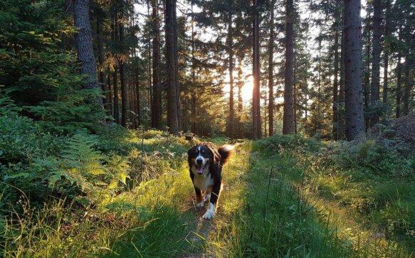 Die Hunde-Stars von Miesenbach