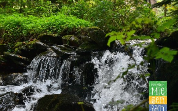 Der Wasserweg in Miesenbach – die kleinen Geheimnisse