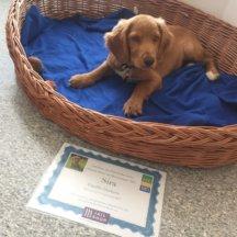 Hunde-Stars-Gewinner Sira: Freude über den Hundekorb
