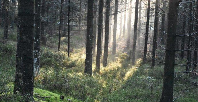 Wandern, wo die Natur in der Steiermark am schönsten ist.