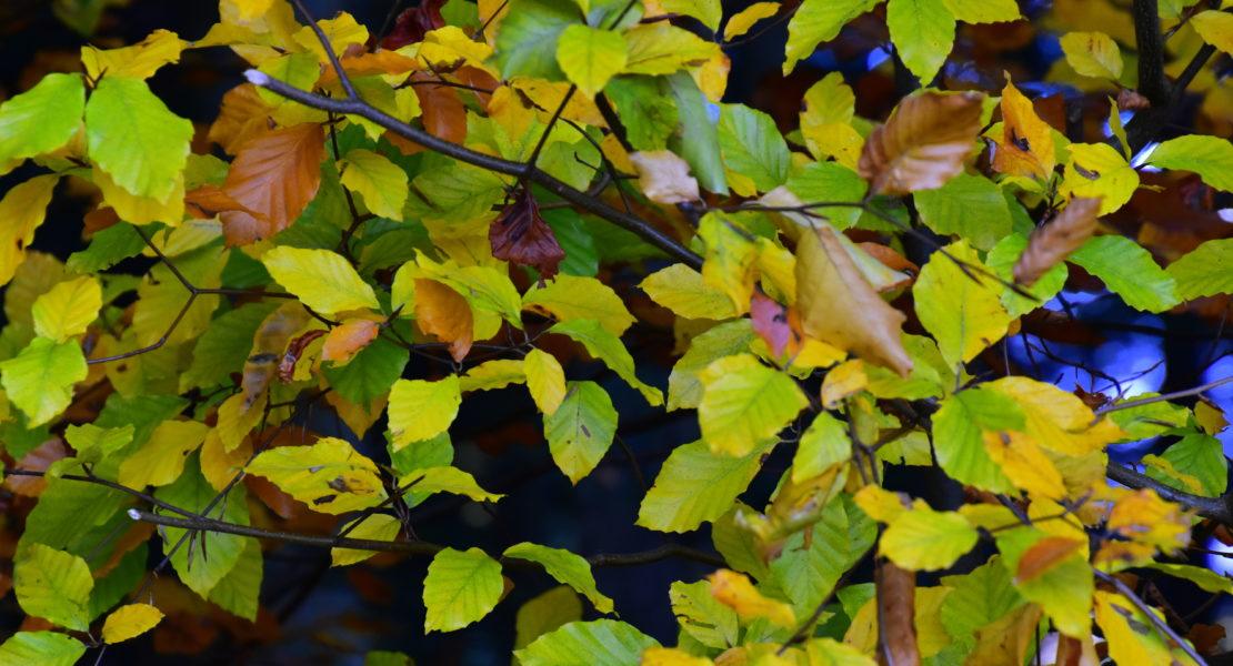 Natur steirisch erleben: Der Goldene Miesenbacher Herbst